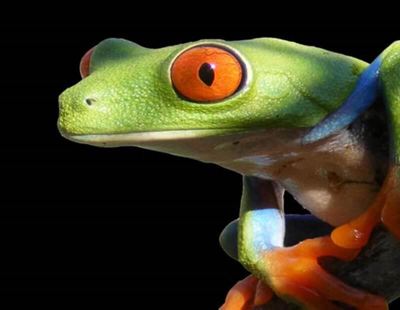 Kentucky Reptile Expo 2019
